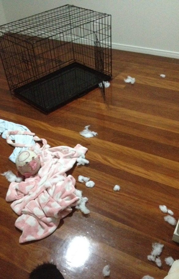 naughty puppy.